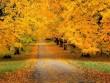 5 điểm đến du lịch mùa thu không nên bỏ lỡ