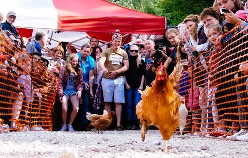 Cuộc thi gà chạy nước rút độc nhất vô nhị ở Anh - 9