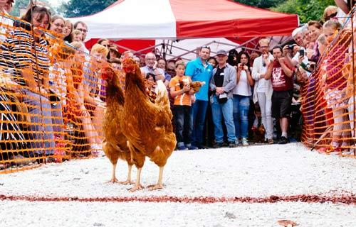 Cuộc thi gà chạy nước rút độc nhất vô nhị ở Anh - 8
