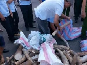 Đà Nẵng: Phát hiện hơn 2 tấn ngà voi nhập lậu từ Nigeria