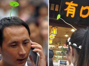 """Thích thú với trào lưu """"trồng cây"""" trên đầu ở Trung Quốc"""