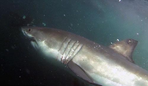 VĐV trở về từ cõi chết sau khi vật lộn với cá mập - 2