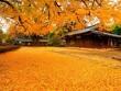 Chiêm ngưỡng cảnh quan đẹp nhất mùa thu xứ Hàn