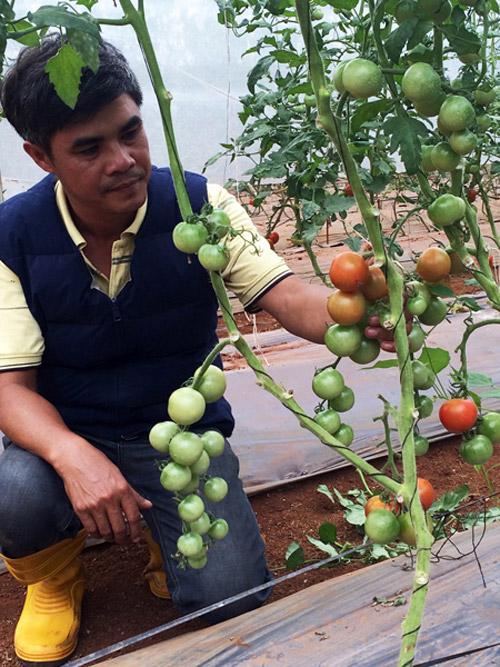 Chàng nông dân Việt và trang trại rau hữu cơ kiểu Nhật - 1