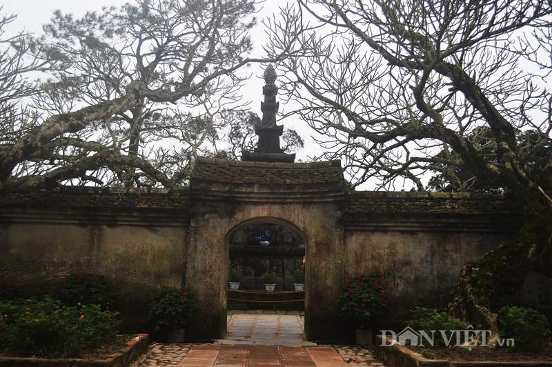 Ngắm cây đại cổ 700 trăm năm ở non thiêng Yên Tử - 4