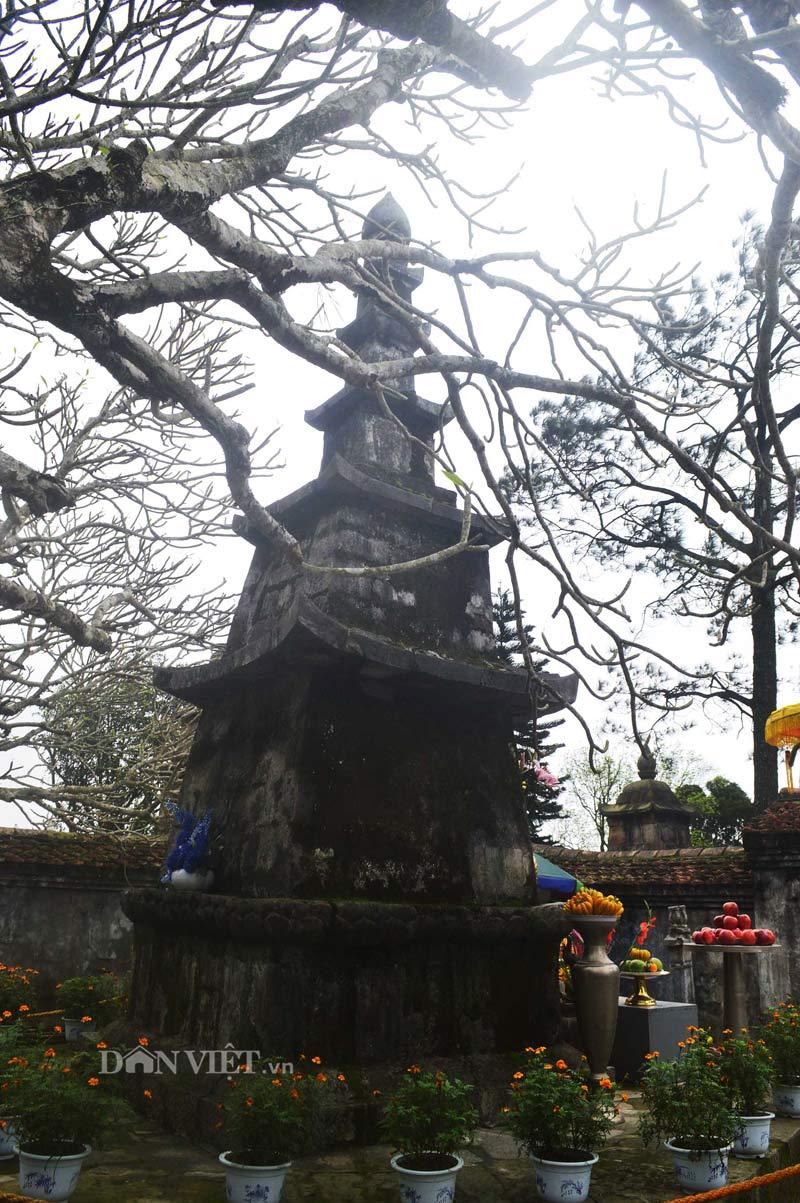 Ngắm cây đại cổ 700 trăm năm ở non thiêng Yên Tử - 10