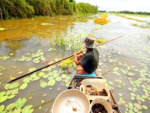 Đi săn cua đồng miền Tây mùa nước lũ