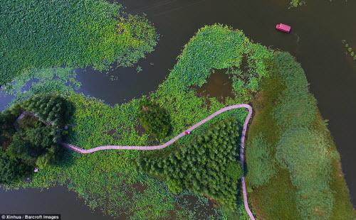 Lạc giữa hồ hoa sen đẹp mê hồn ở Trung Quốc - 1