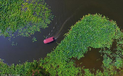 Lạc giữa hồ hoa sen đẹp mê hồn ở Trung Quốc - 3