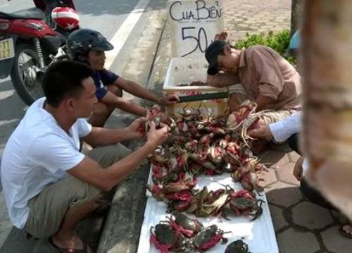 Truy tìm nguồn gốc cua biển siêu rẻ bán tràn lan ở HN - 1