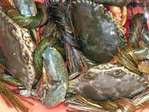 Truy tìm nguồn gốc cua biển siêu rẻ bán tràn lan ở HN - 3