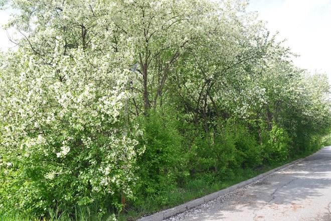 Ngỡ ngàng vẻ đẹp bình yên Siberia vào hè - 15
