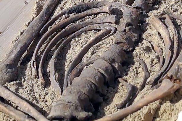 """Bi kịch đằng sau bộ xương """"ma cà rồng"""" 500 tuổi ở Ba Lan - 3"""