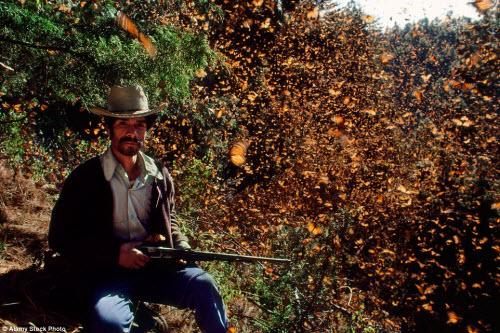 Hàng triệu bướm chúa di cư bay rợp trời Mexico - 15