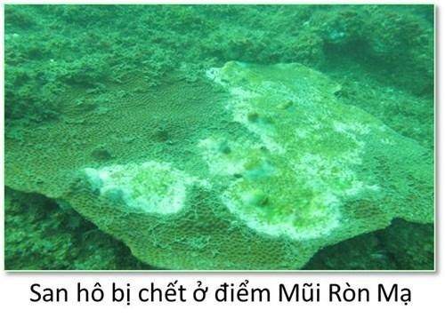 Bộ ảnh đáy biển miền Trung bị hủy diệt khiến ai cũng xót xa - 1