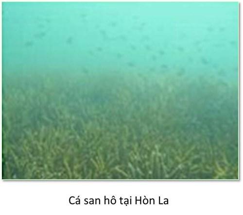 Bộ ảnh đáy biển miền Trung bị hủy diệt khiến ai cũng xót xa - 6
