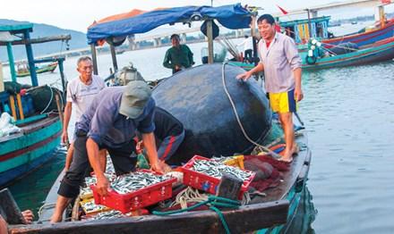Formosa xả thải: Biển Bắc Trung bộ an toàn đến đâu? - 1
