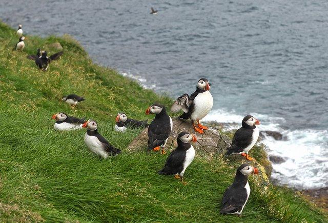 15 điều tuyệt vời chỉ có ở đảo quốc Iceland - 11