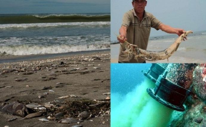 Formosa gây chết cá: Công an làm việc với Sở TN&MT Hà Tĩnh - 1