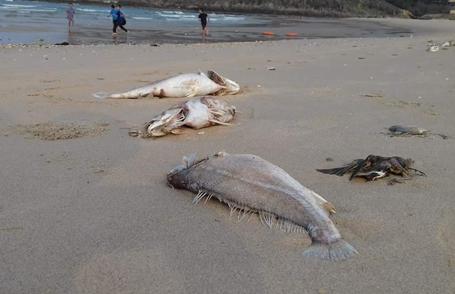Thừa Thiên Huế: Cá chết gây thiệt hại 135 tỷ đồng - 2