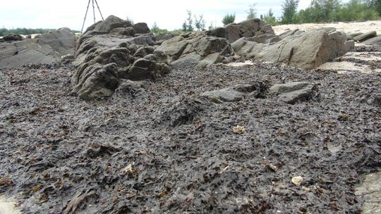 Rong biển chết dạt vào bờ chỉ là hiện tượng tự nhiên - 1