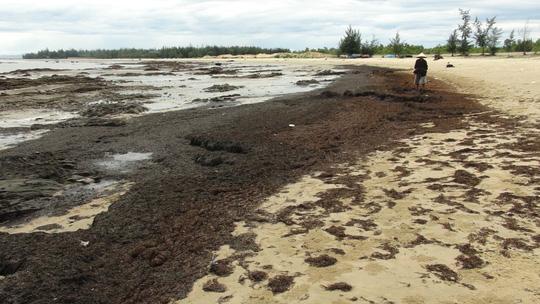 Rong biển chết dạt vào bờ chỉ là hiện tượng tự nhiên - 4