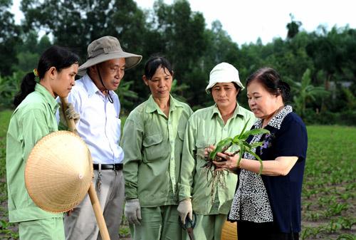 Hiểu thêm về hoạt chất kháng u trong cây trinh nữ hoàng cung - 2