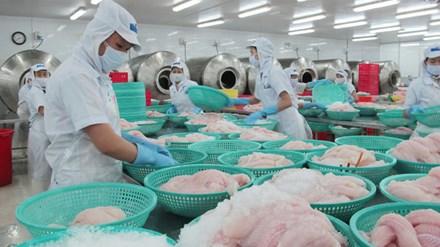 Kiểm tra 100% lô hàng cá tra xuất khẩu sang Mỹ - 1