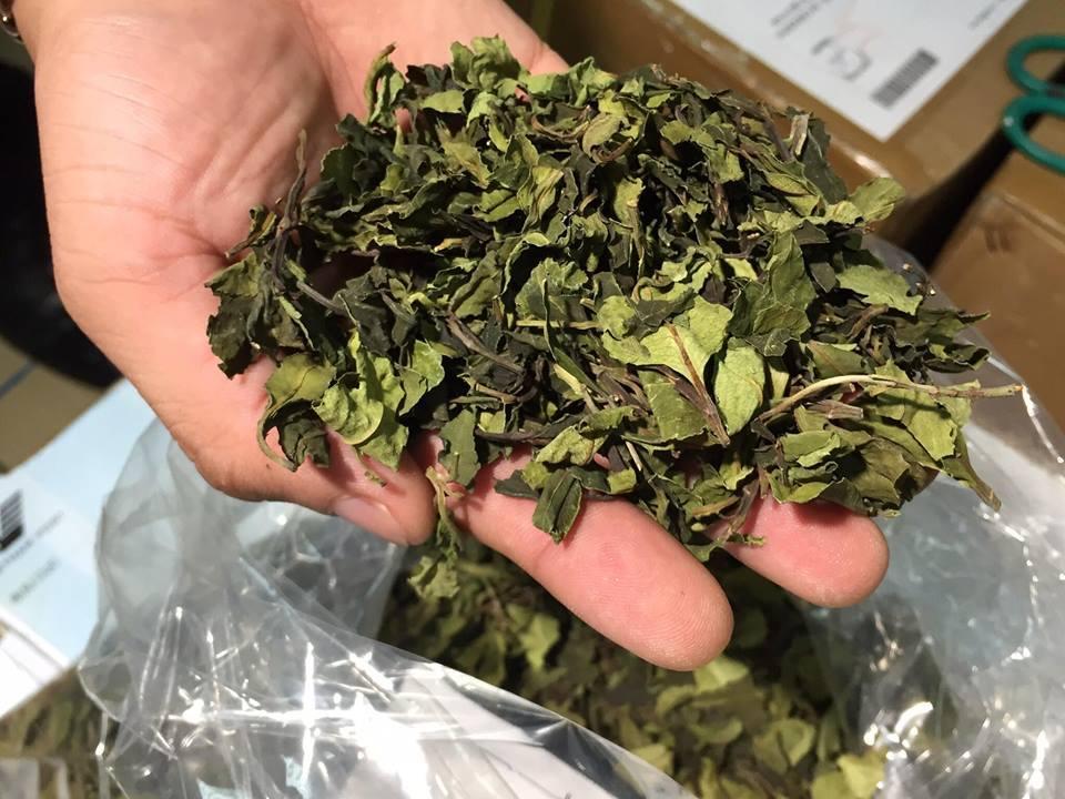 Phát hiện 2,5 tấn thảo mộc chứa chất ma túy cực mạnh - 1