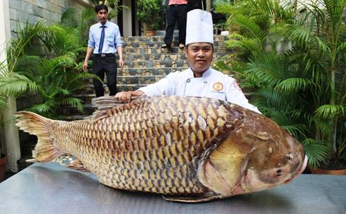 """Cá hô nặng gần 130kg """"bơi"""" từ Biển Hồ về Sài Gòn - 1"""