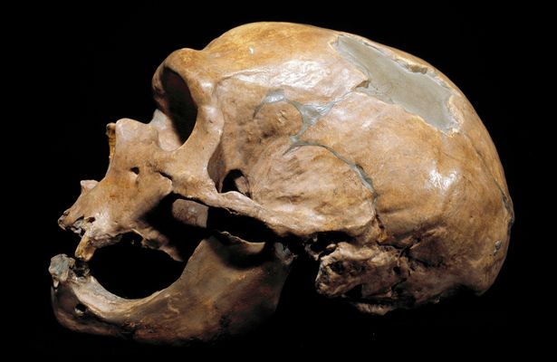 Phát hiện tộc người ăn thịt lẫn nhau 40.000 năm trước - 3