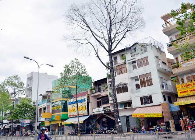 Cổ thụ gần 100 năm tuổi ở Sài Gòn bỗng chết bí ẩn - 13