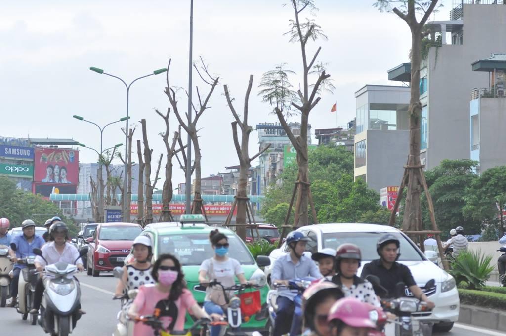 Chuyên gia Nguyễn Lân Hùng: Hà Nội rất phù hợp trồng phượng - 1