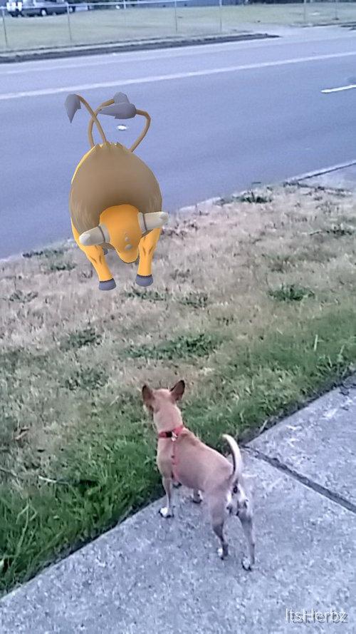 """1001 tình huống xuất hiện """"khó đỡ"""" của Pokémon - 5"""