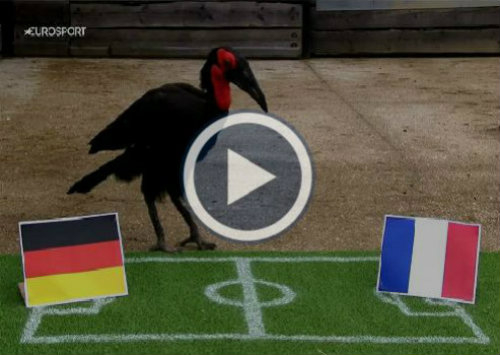 """""""Nhà tiên tri"""" xuất sắc nhất Euro: Điềm may cho Pháp - 2"""