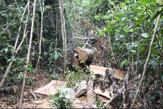 Bộ CA mật phục lâm tặc ở Lâm Đồng: Bắt giữ 12 đối tượng - 1