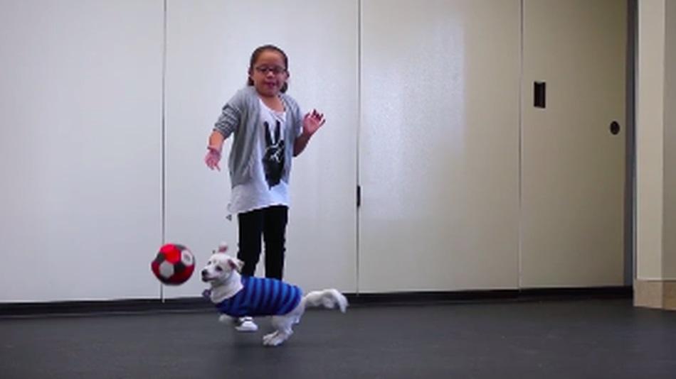 Mỹ: Bé gái 10 tuổi dạy chú chó điếc ngôn ngữ cử chỉ - 1
