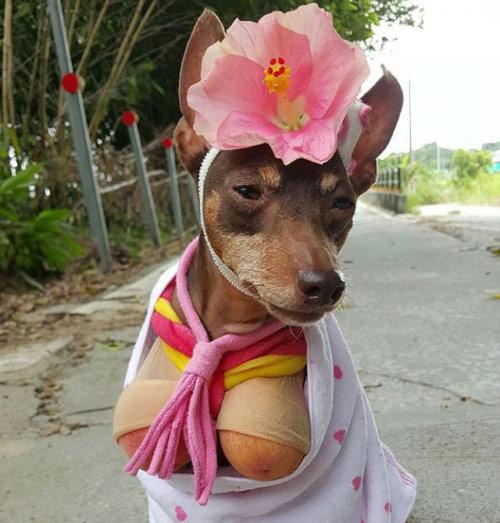 """Chó mặc váy, quàng khăn bán hàng """"đắt như tôm tươi"""" - 4"""