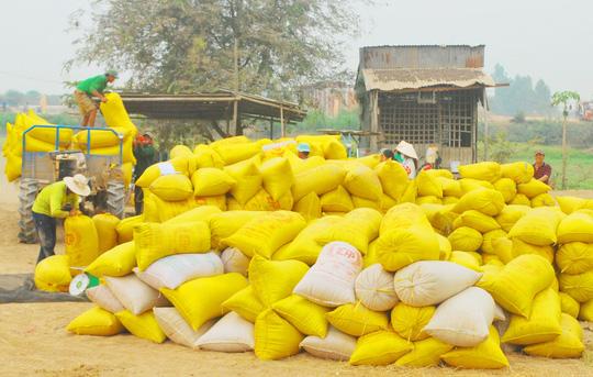 Xuất khẩu gạo giảm mạnh - 1