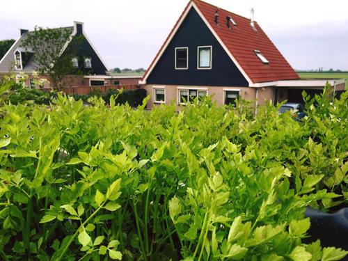 Mê mẩn vườn rau quả xanh mướt của mẹ Việt ở Hà Lan - 5