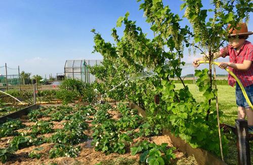 Mê mẩn vườn rau quả xanh mướt của mẹ Việt ở Hà Lan - 10