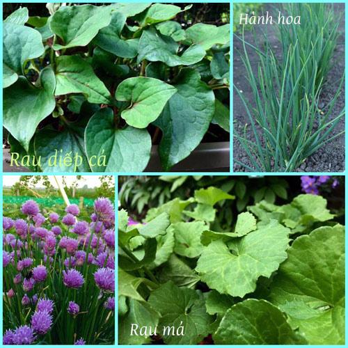 Mê mẩn vườn rau quả xanh mướt của mẹ Việt ở Hà Lan - 9