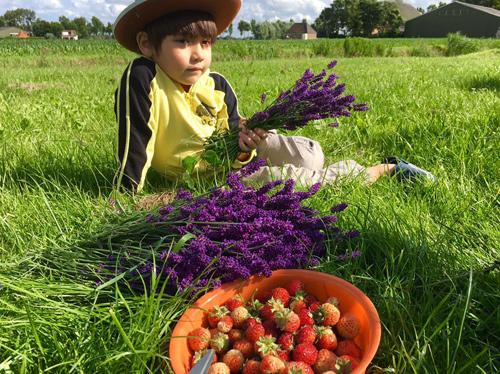 Mê mẩn vườn rau quả xanh mướt của mẹ Việt ở Hà Lan - 13