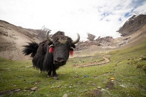 Tây Tạng đẹp mê hồn qua bộ ảnh của nhiếp ảnh gia Việt - 10