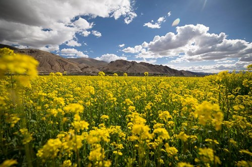 Tây Tạng đẹp mê hồn qua bộ ảnh của nhiếp ảnh gia Việt - 6