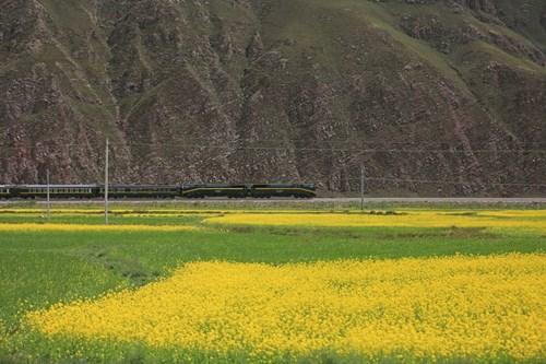 Tây Tạng đẹp mê hồn qua bộ ảnh của nhiếp ảnh gia Việt - 8