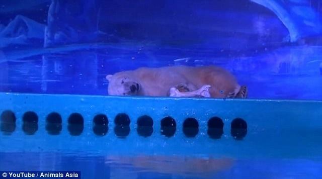 """TQ: Nhốt gấu Bắc Cực để phục vụ chụp ảnh """"tự sướng"""" - 1"""