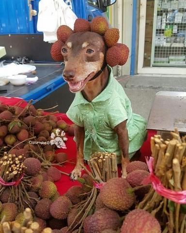 Chú chó bất ngờ nổi tiếng vì gắn hoa quả đầy đầu - 2
