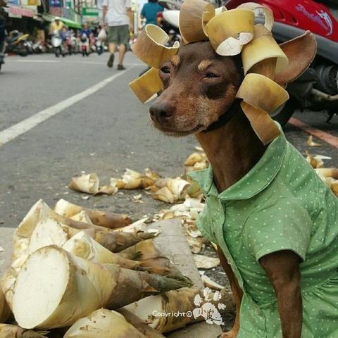 Chú chó bất ngờ nổi tiếng vì gắn hoa quả đầy đầu - 3