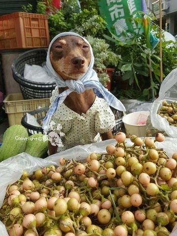 Chú chó bất ngờ nổi tiếng vì gắn hoa quả đầy đầu - 5